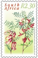 Postage stamp with image of Sutherlandia frutescence