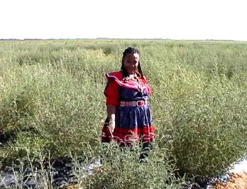 Virginia Rathele - a sangoma or traditional healer - in a cultivated field of Sutherlandia.